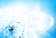 Floral card,  (soft focus) Royalty Free Stock Photo