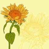Floral card with sunflowers Royalty Free Stock Photography