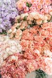 Floral carpet, flower texture, shop concept. Beautiful fresh blossoming flowers roses, spray roses, lilac gillyflower stock photography