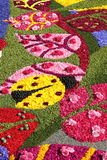 Floral Carpet in Spello Stock Images