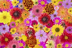 Floral chaos abstract collage Royalty Free Stock Photo