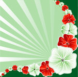 Floral Christmas Background 3 Stock Image