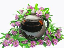 Floral clover tea in teapot Royalty Free Stock Photos
