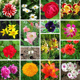 Floral collage Stock Photos