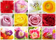 Floral collage. CLose up of 12 flowers over white background Stock Photography