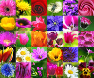 Floral collage Stock Images