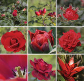 Floral collage in red colors. Collection of red flowers and fruits royalty free stock photography