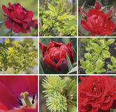 Floral collage in red and green colors. Collection of red flowers and green plants. 9 elements. square stock photo