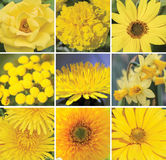 Floral collage in yellow. Ser of 9 yellow flowers stock images