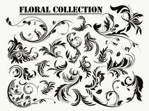 Floral collection stock illustration