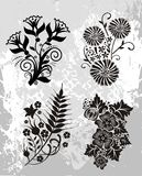 Floral collection Royalty Free Stock Photography