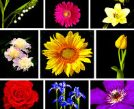 Floral collection. Royalty Free Stock Image