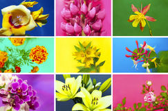 Floral collection. Stock Image