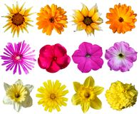 Floral collection. Colorful flowers from various plants. Design elements isolated on white background. Isolation is on a transparent layer in the PNG format stock photography