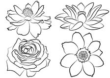 Floral coloring page. Collection of silhouette flowers, isolated on white background. Floral set with marigold, rose, lotus water lily and cosmos flower Royalty Free Stock Images