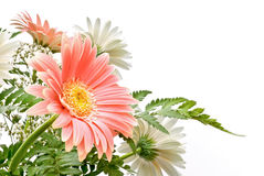 Floral composition. Elegant composition of Gerbera flowers with delicate colours Stock Images