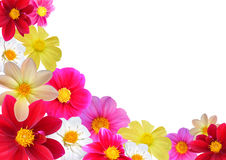 Floral composition. Flofal composition of different colours dahlia.  Without background, A3 Royalty Free Stock Photos