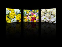Floral composition Royalty Free Stock Photo