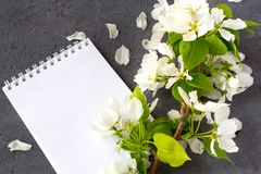Floral composition.Concept of writing a romantic letter for Valentines day. Floral composition on a spring day. Blossoming branches of apple tree on a grey stock image