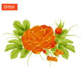 Floral composition. Orange rose flower with leaves and rosehip berries Stock Photos