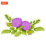 Floral composition. Purple rose flowers with leaves, buds and fern Stock Photos