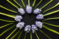 Floral composition - Round frame with Spring Flowers Hyacinths on Dark Contrast background. Top view with copy space. greeting or. Invitation card design stock images