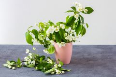 Floral composition on a spring sunny day. royalty free stock images