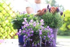 Floral composition violet color Stock Photos