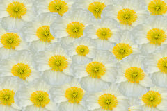 Floral composition of white flowers Stock Photos