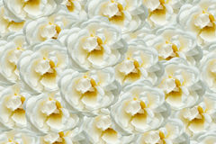 Floral composition of white roses Stock Photography