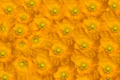 Floral composition of yellow flowers Stock Image