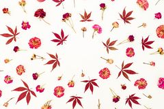 Floral concept of red maple leaves and dried red or pink roses on white background. Flat lay, top view. Stock Image