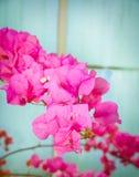 Floral cor-de-rosa Imagens de Stock
