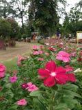 Floral cor-de-rosa vermelho Imagem de Stock