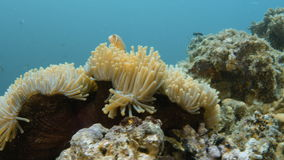 A floral coral reef underwater stock video footage