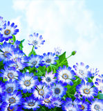Floral daisy border Royalty Free Stock Photography
