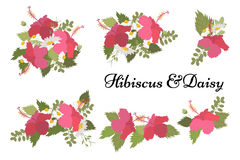 Floral daisy hibiscus background vector illustration Royalty Free Stock Image
