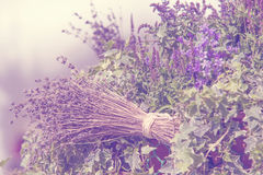 Floral decor with Ivy, bundle of Lavender and Bluebells Royalty Free Stock Photography