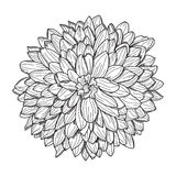Floral decoration Royalty Free Stock Images