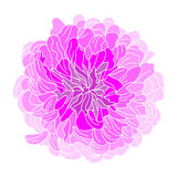 Floral decoration Royalty Free Stock Photos