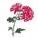 Floral decoration Stock Photo