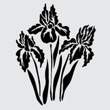 Floral decoration. Elegant decorative iris flowers, design element. Floral branch. Floral decoration for vintage wedding invitations, greeting cards, banners Royalty Free Stock Photography