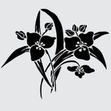 Floral decoration. Elegant decorative lily flowers, design element. Floral branch. Floral decoration for vintage wedding invitations, greeting cards, banners Stock Image