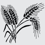 Floral decoration. Elegant decorative wheat, design element. Floral decoration for vintage invitations, greeting cards, banners Stock Images