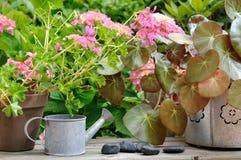 Floral decoration in garden Stock Photo