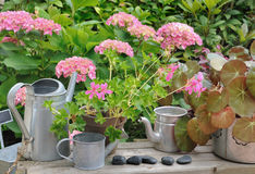 Floral decoration in garden Stock Images