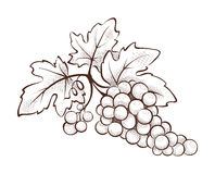 Floral decoration - grape Royalty Free Stock Photography