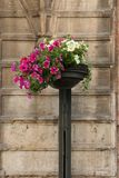 Floral decoration in the streets of Trento Royalty Free Stock Photo