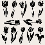 Floral decorations set. Set of 12 decorative tulip flowers, design elements. Floral branches. Floral decorations for vintage wedding invitations, greeting cards Stock Image