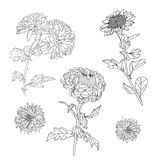 Floral decorations set Stock Images